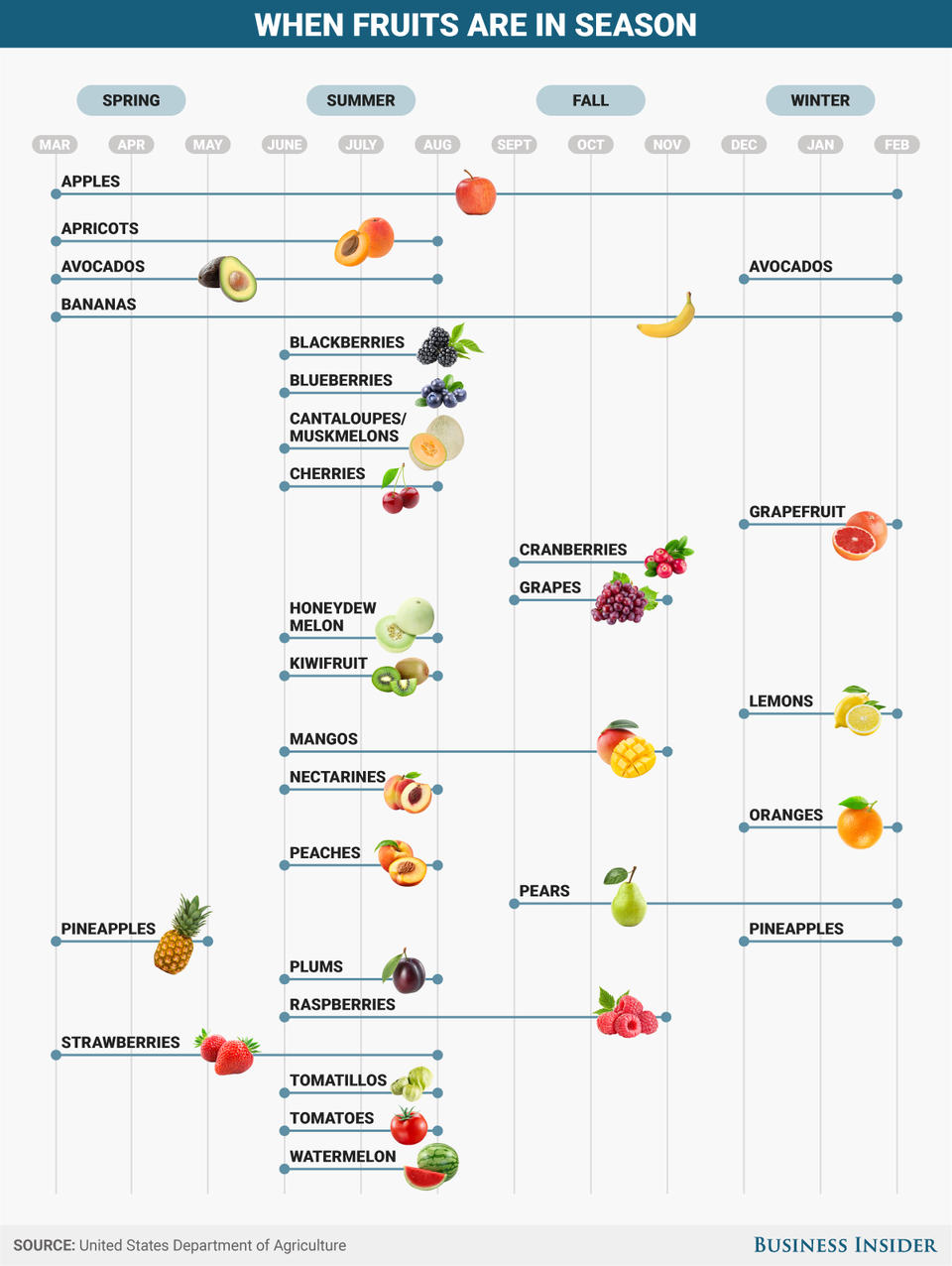 Infograph of when fruits are in season